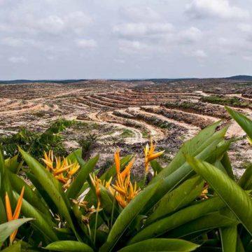 Verdedig onze palmolie