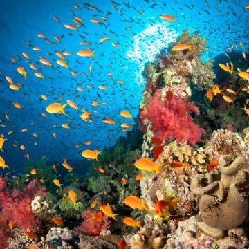 Milieuschade meten? Luister naar de oceaan