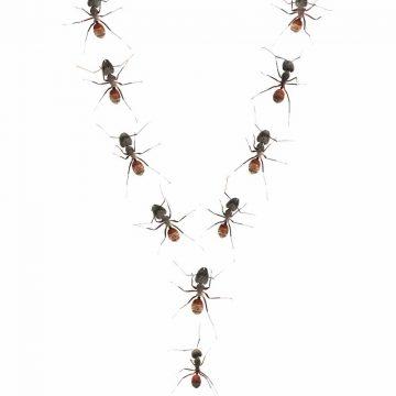 Langs het mierenpad