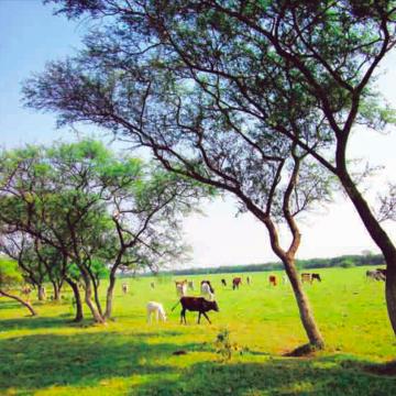 Hoe een Bengaals eilandje een ecologisch paradijs werd