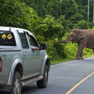 Hoe bescherm je oogst en olifant?