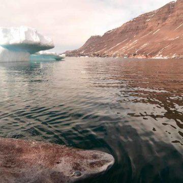 De man, de haai en de zee: wie wint?