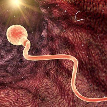 Spermaconcurrentie bestaat niet