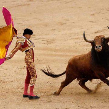 Nieuwe ster maakt stierenvechten weer hip