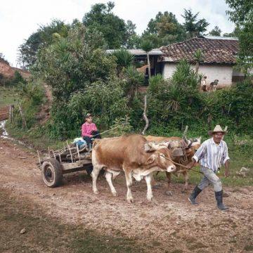 3. Hondurezen weg uit 'droogtegordel'