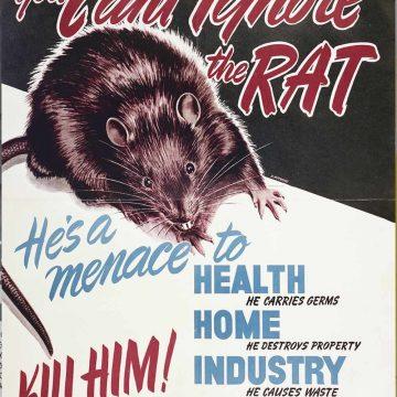 Als ratten in de val