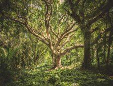 Opening Dossier: Wat je van bomen kunt leren