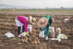 Een nieuwe kijk op de Libanese landbouw