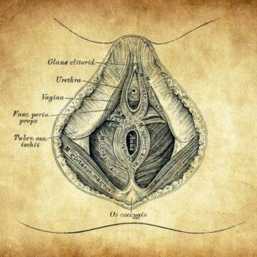 De verborgen lust van de vrouw. Of hoe de clitoris langzaam uit de geschiedenisboeken verdween