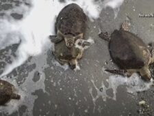 Facebook blokkeert nieuws in Australië   Schildpadden in Texas verlamd door kou