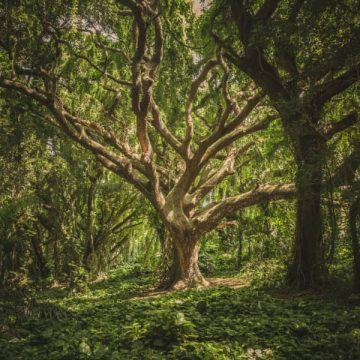 Onderschat nooit de intelligentie van bomen
