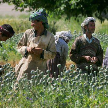 Taliban zijn de grootste drugshandelaren ter wereld