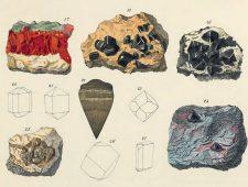 Een kleurensleutel voor de natuurwereld: van mageremelkwit tot kruidnagelbruin