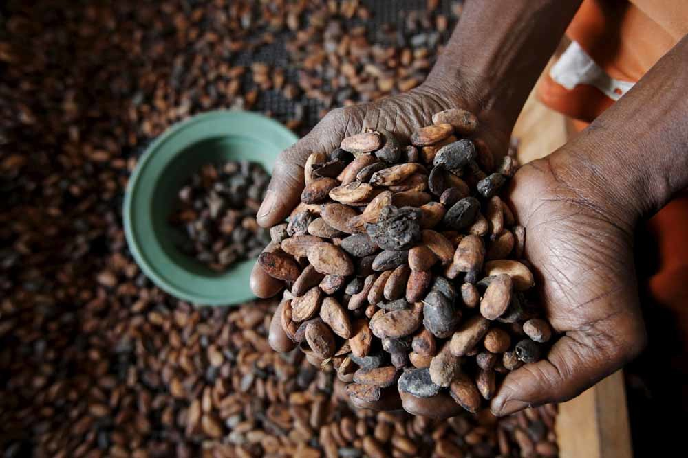Ivoriaanse cacaobonen. © Thierry Gouegnon / Reuters