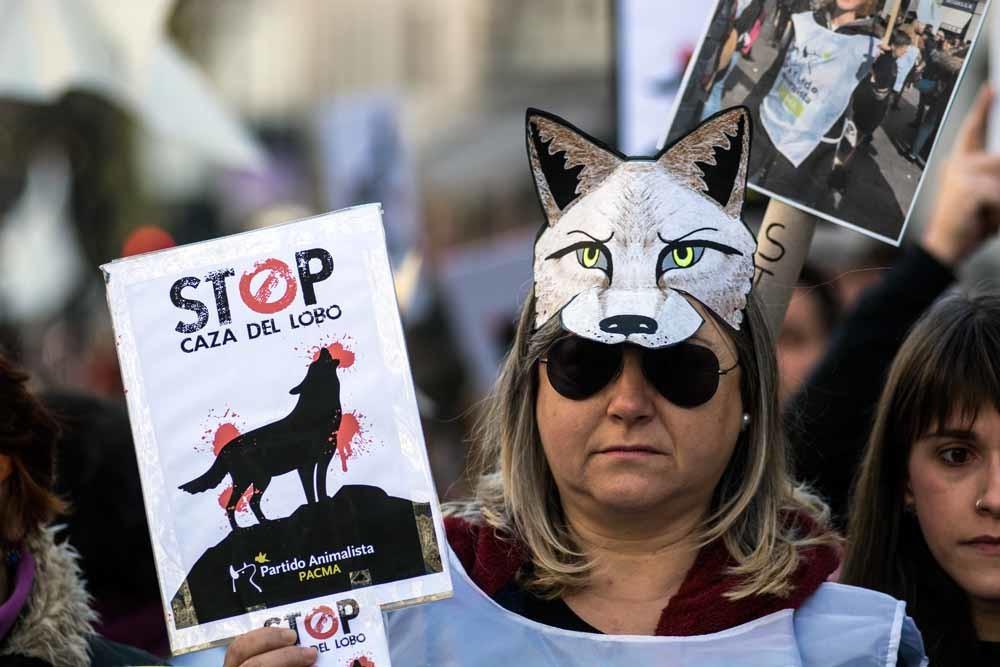 1. Een Spaanse pro-wol etoger in Madrid, 2013. © Marcos del Mazo; 2. Wolf met jongen in Duitsland. © Getty Images