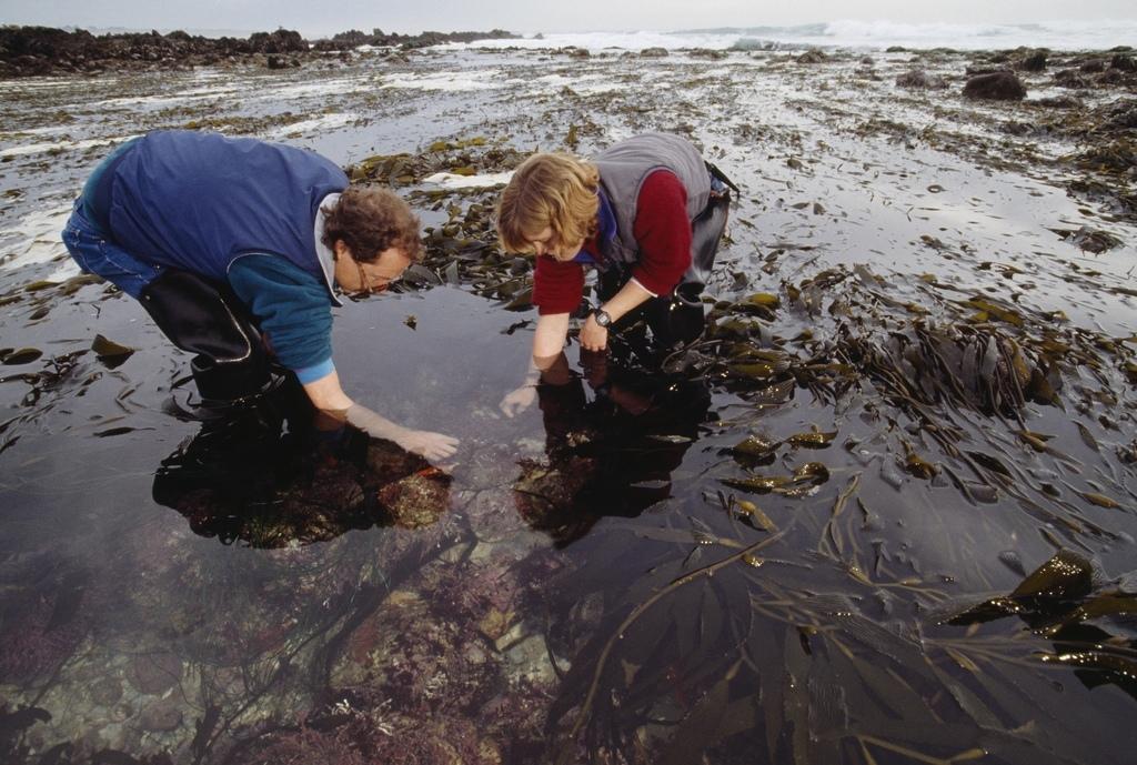 Biologen verzamelen zeewezens bij Monterey, Californië.