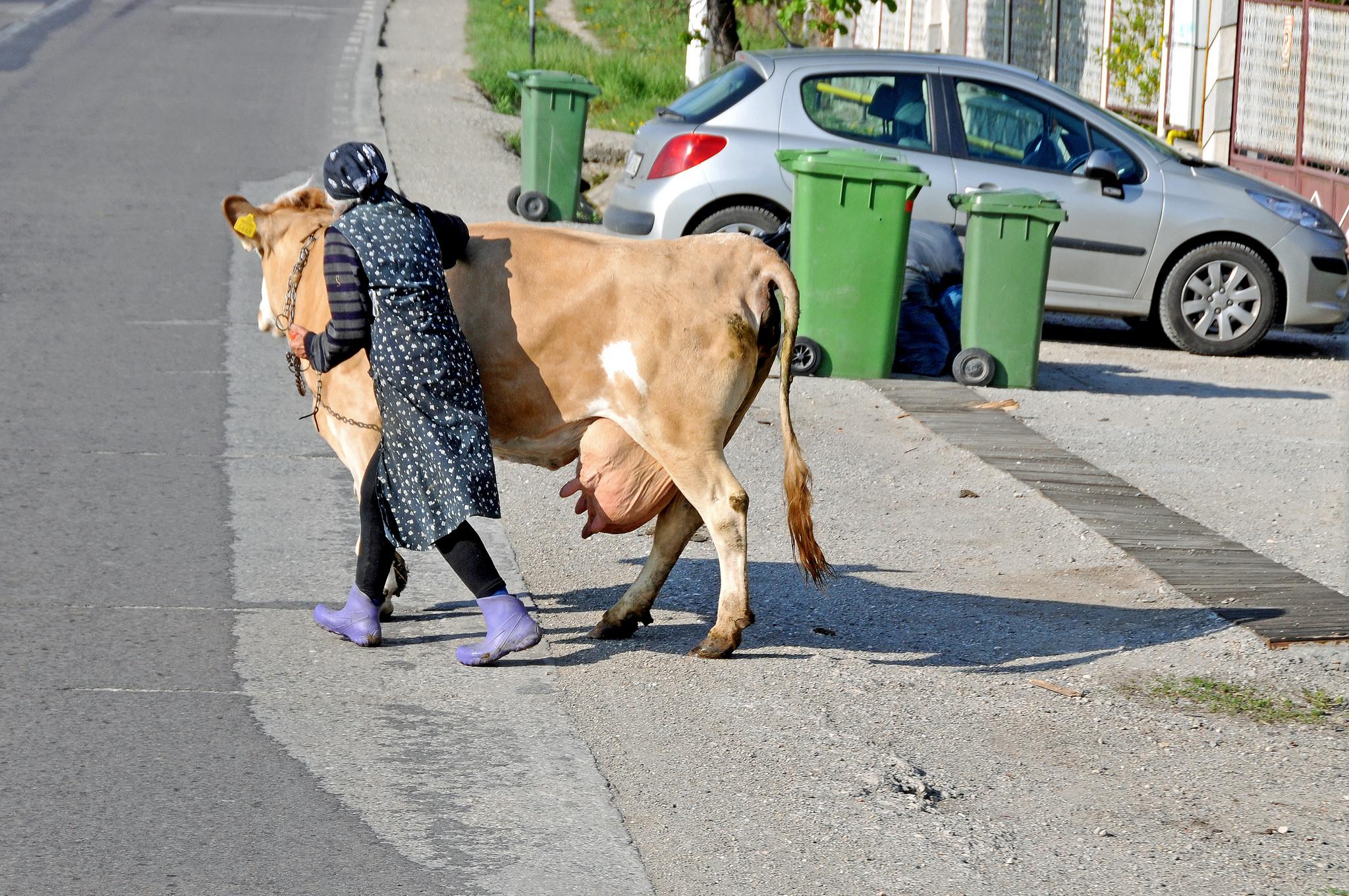 Een vrouw in de Roemeense plaats Brasov steekt de weg over. – ©  Dennis Jarvis / Flickr