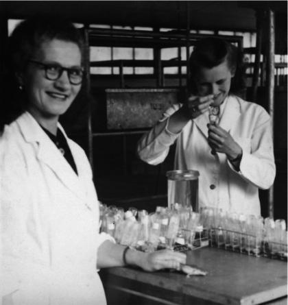 Audrey Peattie (rechts) aan het werk in het ziekenhuis van Watford. In de jaren vijftig had zij het glibberige taakje uit kikkers los te krijgen of een vrouw al dan niet zwanger was.