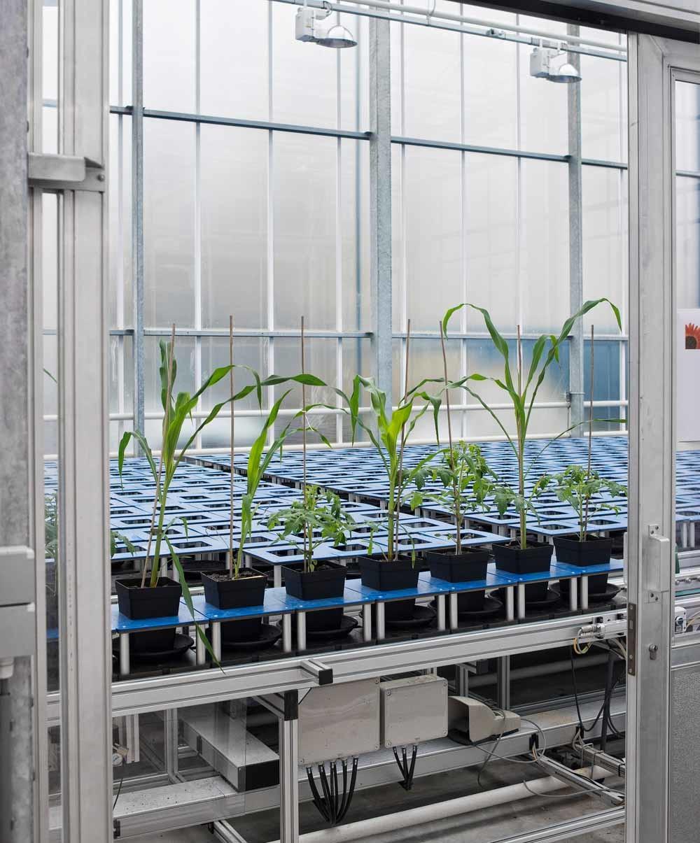 KeyGene, een Wagenings moleculaire geneticabedrijf dat zich bezighoudt met gewasverbetering. – © Patrick Post