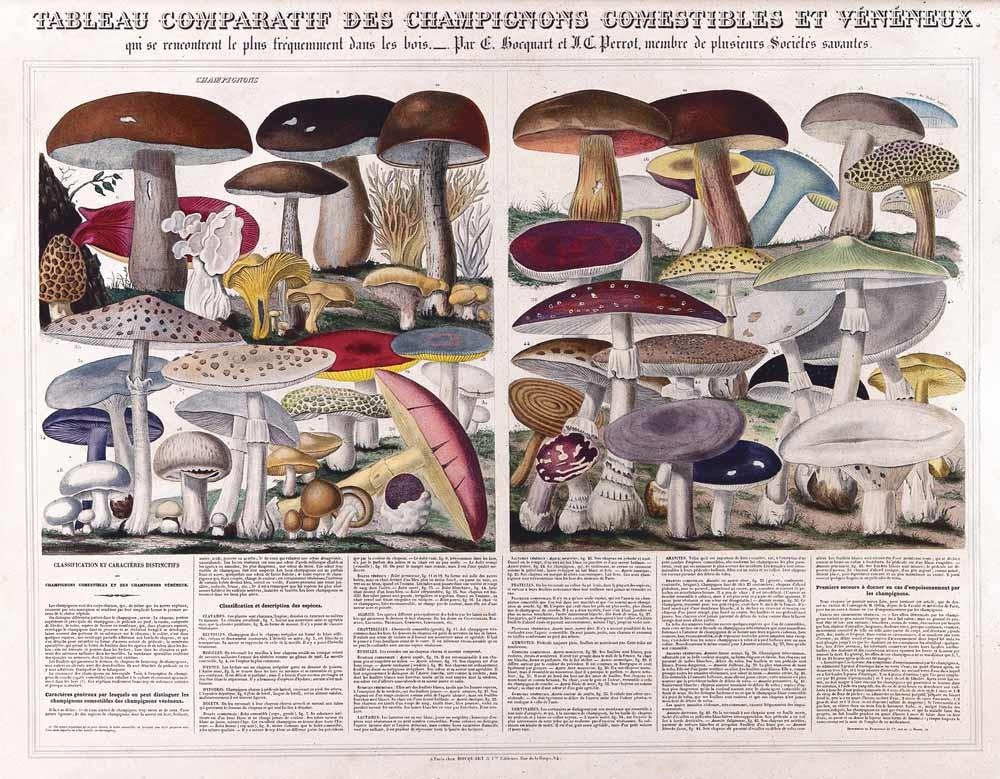 Eetbare paddestoelen © A.M. Perrot / Wellcome Collection