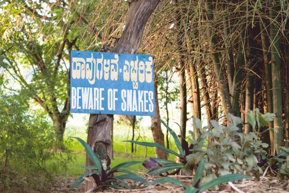 Een waarschuwingsbord aan de oever van het Karanji-meer nabij Mysore. Jaarlijks worden er zo'n 2,8 miljoen Indiërs gebeten door een slang. – © Ajith Sivasankaran / Alamy Stock