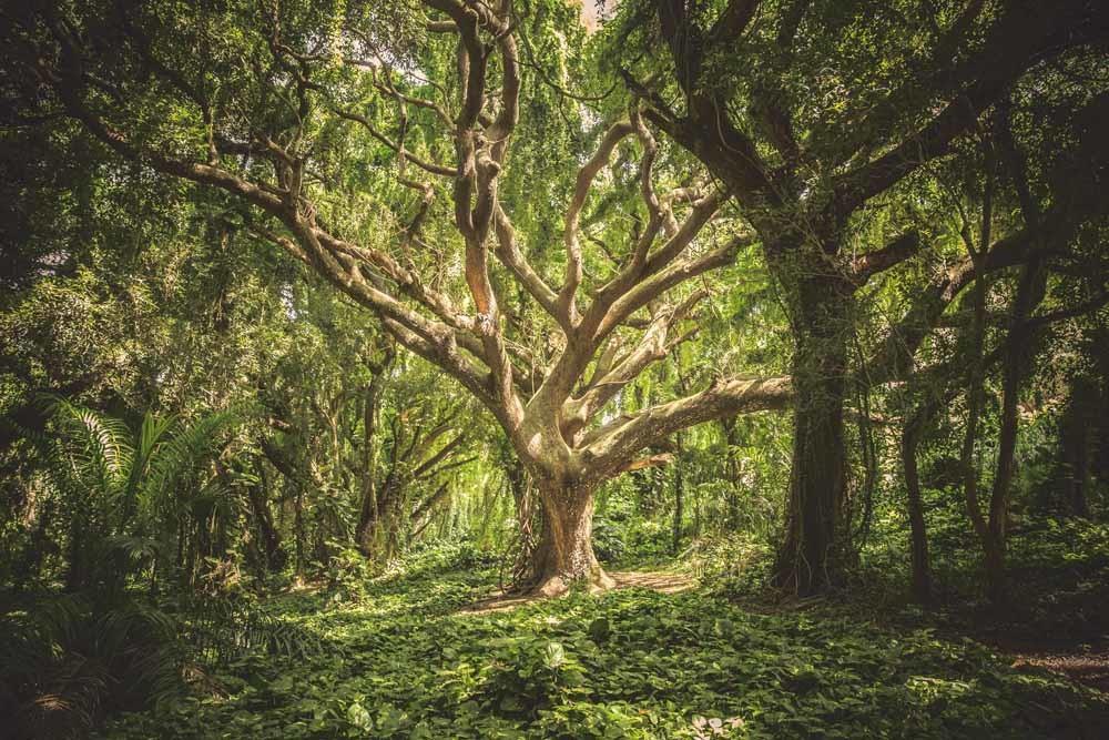 We gaan ervan uit dat bomen goedaardige schepsels zijn zonder intelligentie, omdat ze zich niet zoals wij gedragen. Maar in het 'wood wide web' gebeurt van alles waar we geen weet van hebben. – © Unsplash