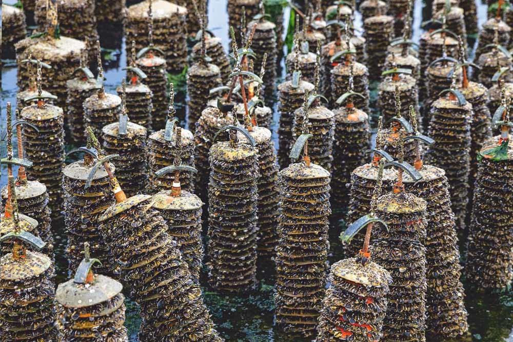 Een oesterkwekerij op Cape Cod in Massachusetts. Ook aan de oostkust ondervinden oesterkwekers problemen door de instorting van de export. © John Greim / LightRocket/ Getty Images.