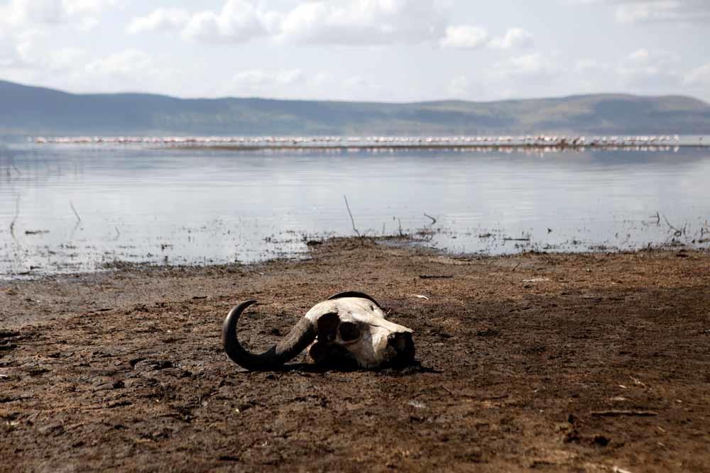 Lake Nakuru National Park. – ©Reuters