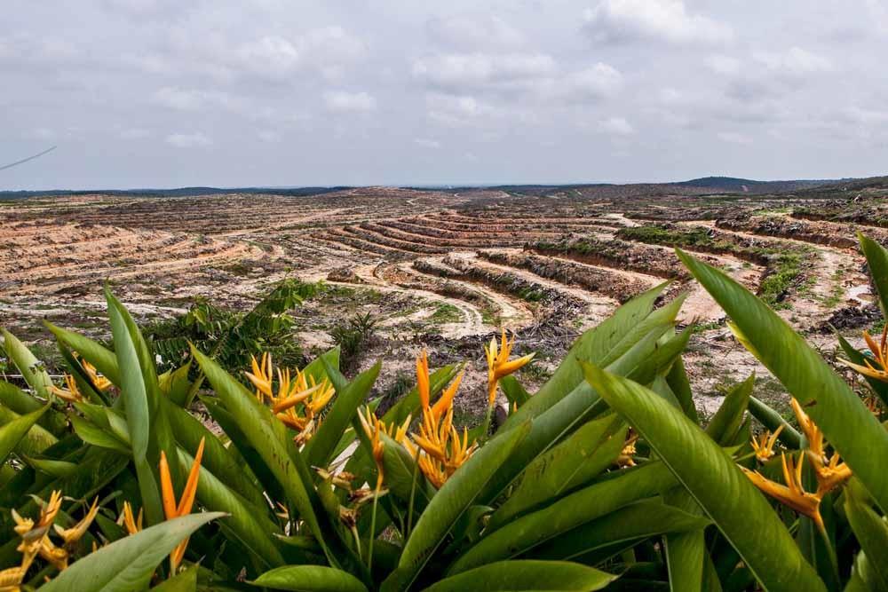 Landbouwgrond op Sumatra die is vrijgemaakt voor palmolieplantages. – © Ulet Ifansasti / Getty Images