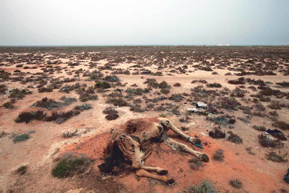 Een dode kameel in de Tunesische woestijn, vlak bij de grens met Libië. – © HH
